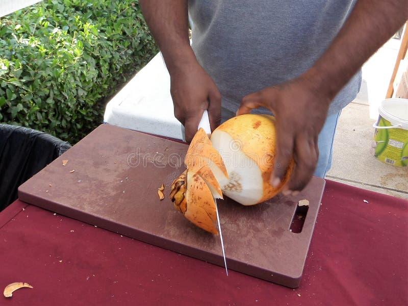 Förbereda kokosnötfruktsaft royaltyfria bilder