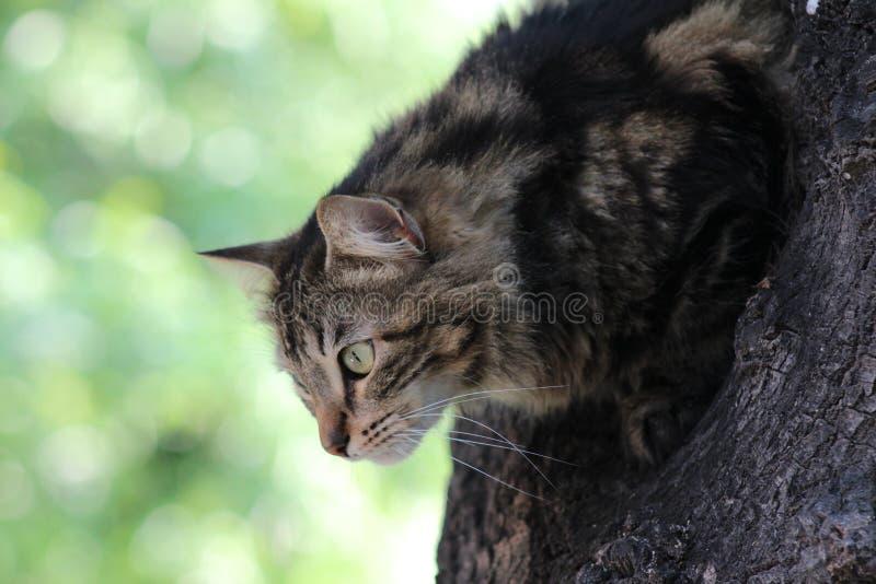 Förberedd katt att jaga royaltyfri fotografi
