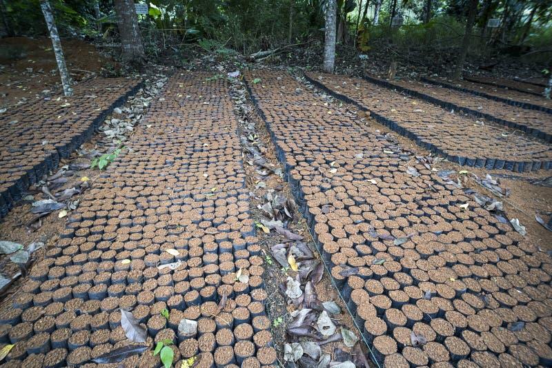 Förberedelse av jord som sätts in i krukan för att vänta på att plantera i trädgården arkivbilder