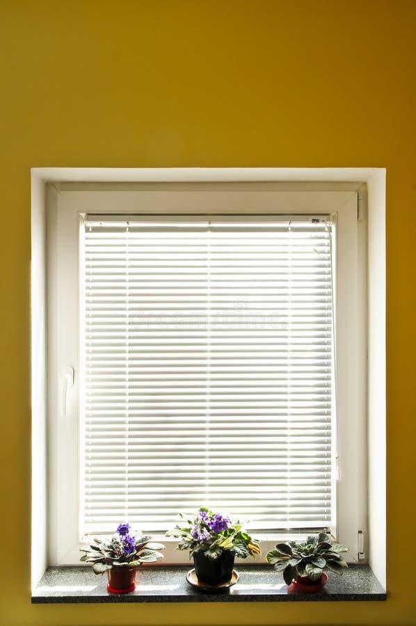 förblindar fönstret arkivbild