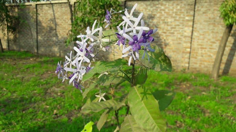 F?rbluffa blomman med ljus bakgrund arkivbild