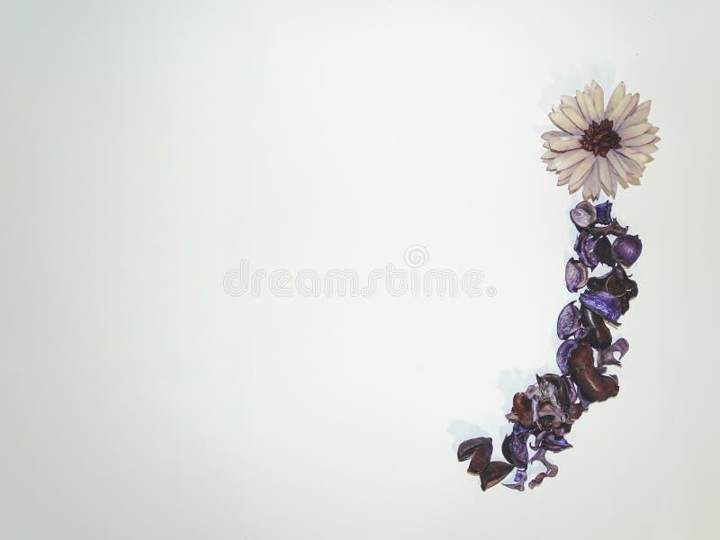 F?rbluffa den purpurf?rgade blomman och sidor med vit bakgrund royaltyfri bild