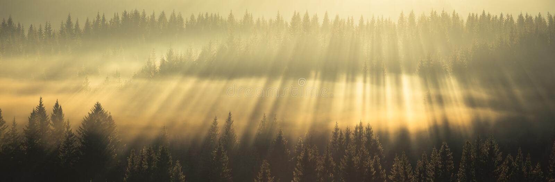Förbluffa ljusa strålar ovanför skogen royaltyfri foto