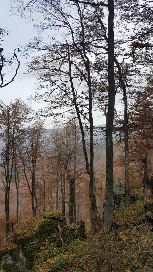 Förbluffa naturen och det färgglade stället i Serbien arkivfoto