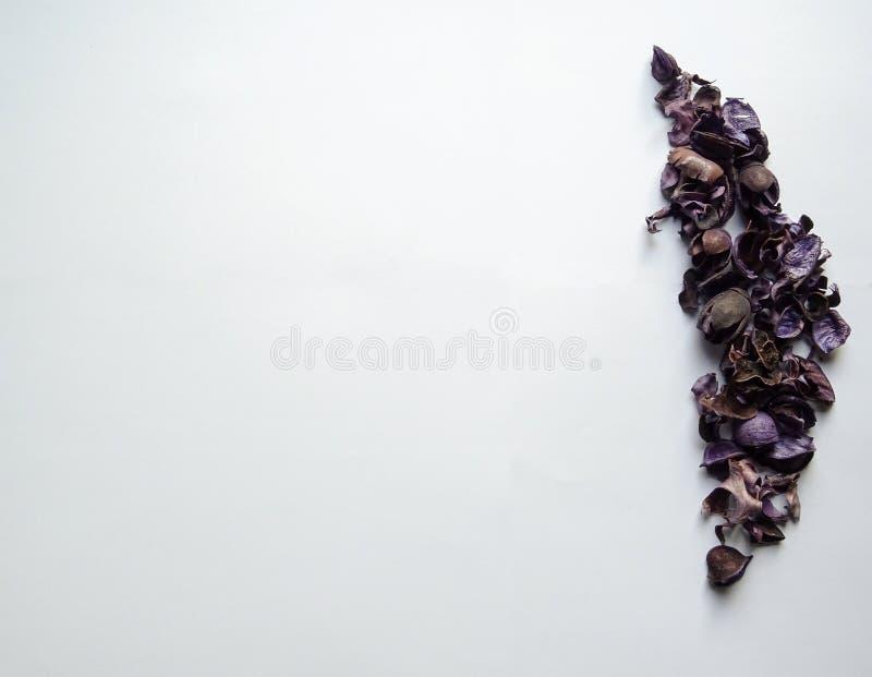 F?rbluffa purpurf?rgade sidor med vit bakgrund royaltyfria foton