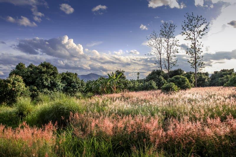 Förbluffa romanticlandscape med lösa rosa blommor, härlig molnig himmel och berget i bakgrunden royaltyfri fotografi