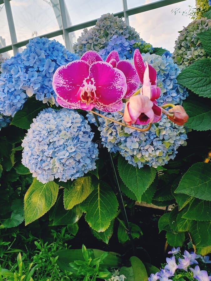 Förbluffa sikt av mångfärgade blommor royaltyfri bild