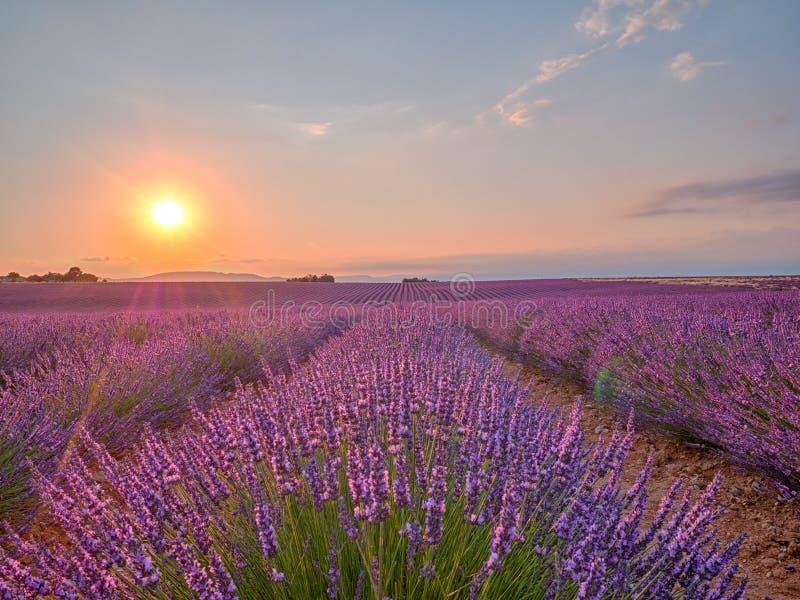 Förbluffa solnedgång över det violetta lavendelfältet i Provence arkivfoton