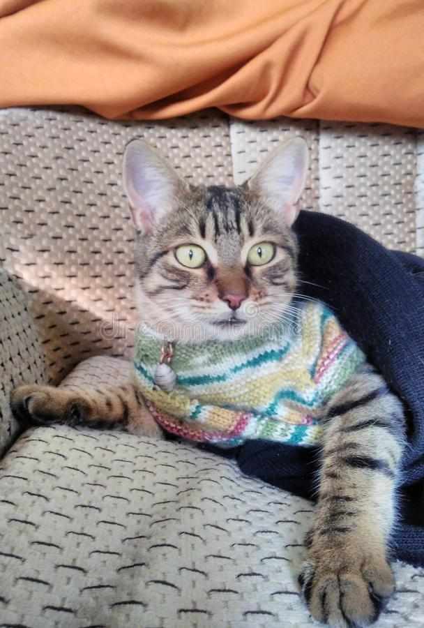 Förbluffa strimmig kattkatten för gröna ögon arkivbild