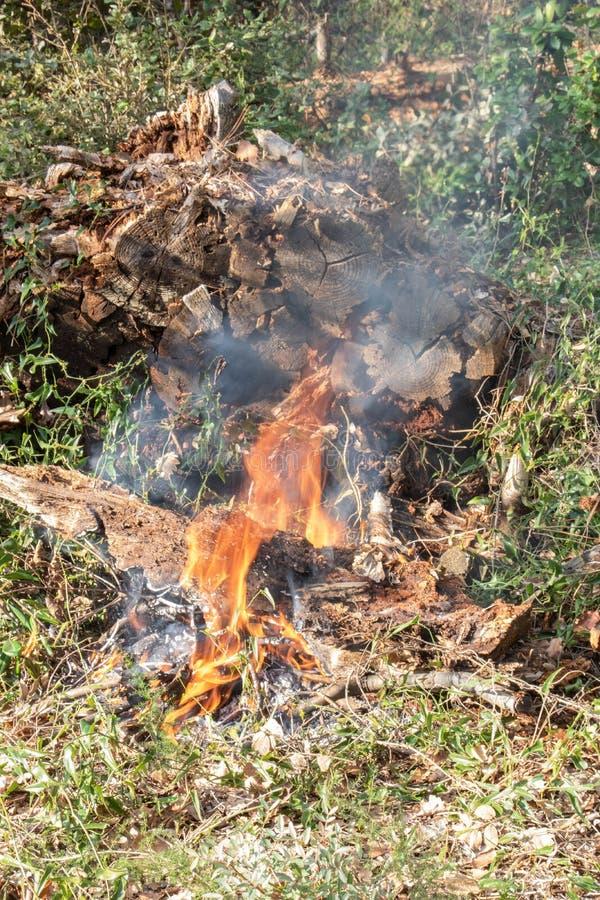 Förbud av att bränna grön avfalls - skogsbrand fotografering för bildbyråer