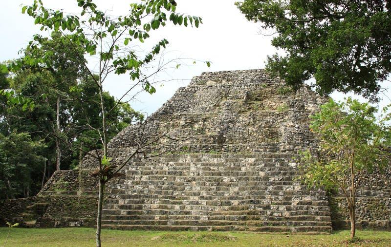 Fördärvar av den Mayan templet på Yaxha, Guatemala royaltyfri fotografi