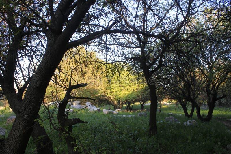 Fördärvar av forntida stad av bibliska Kedesh i Israel arkivfoton