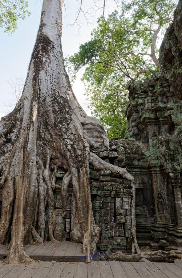 Fördärvar av Ta Prohm, Cambodja royaltyfri bild