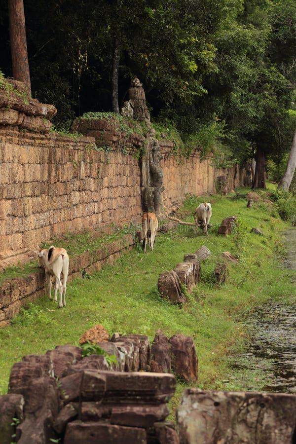 Fördärvar i Angkor Wat arkivbild