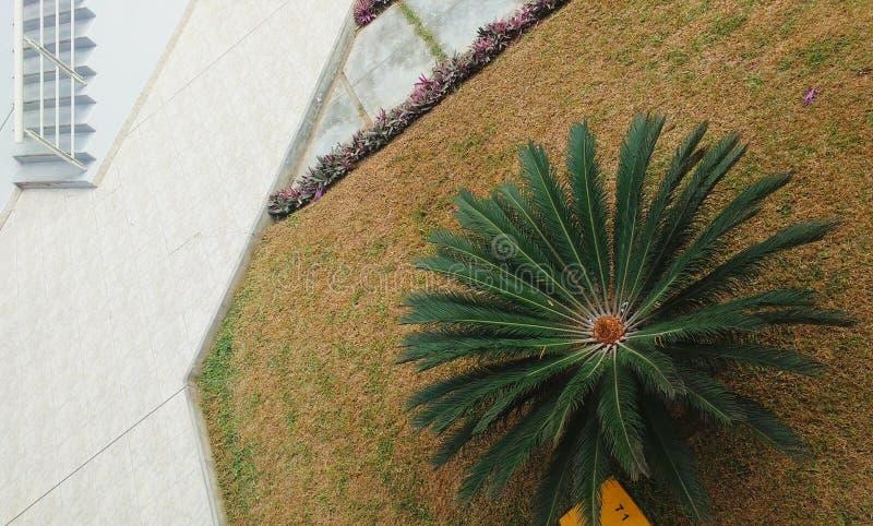 Fördela växterna arkivbilder