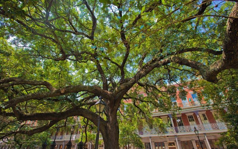 Fördelande skuggaträd och Ironwork av New Orleans royaltyfri bild