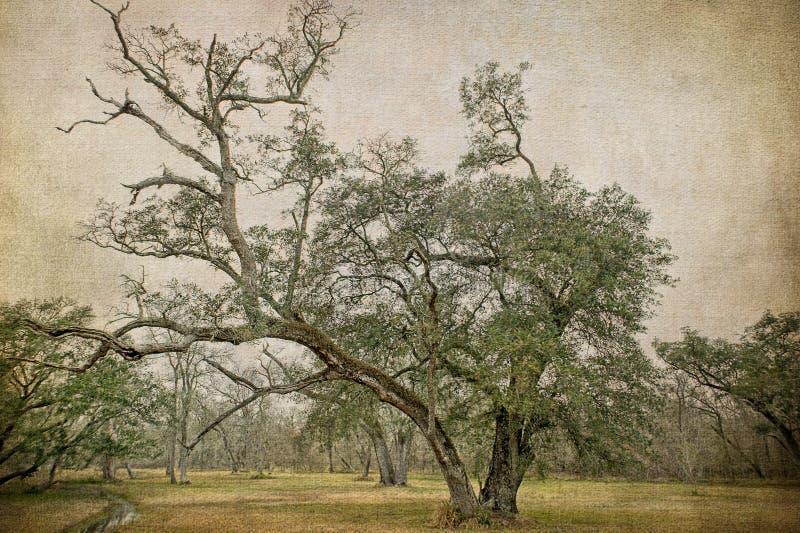 Fördelande sydliga Live Oak Tree Near en liten vik royaltyfri bild