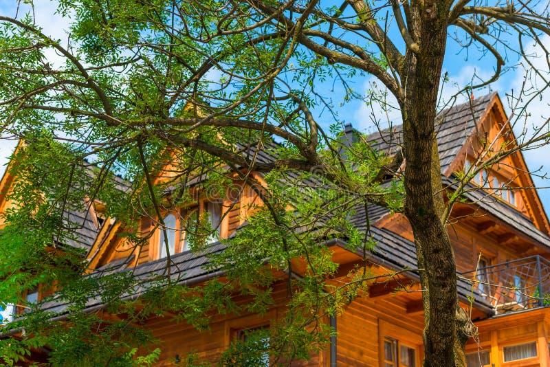 fördelande trädnärbild fotografering för bildbyråer