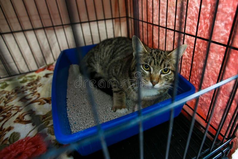 Fördelning av hemlösa djur Hemlösa katter i bärbara burar arkivbilder