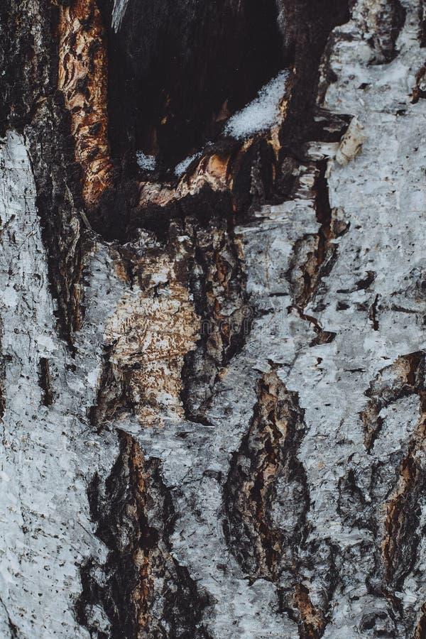 Fördjupningen för förkylning för färg för skället för svart för brunt för textur för trädvintersnö parkerar detaljen arkivfoton