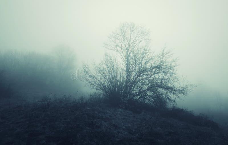 Fördunkla över äng med trädet i sen höst arkivfoton