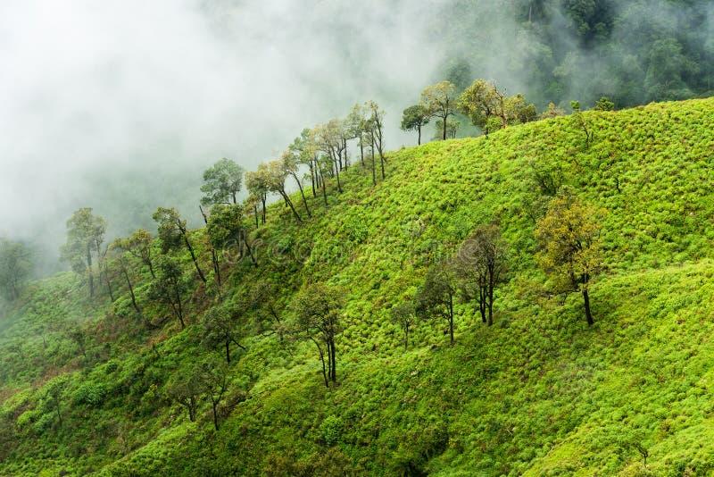 Fördunkla den dolda regnskogen på bergkant i en nationalpark på morgon arkivfoton