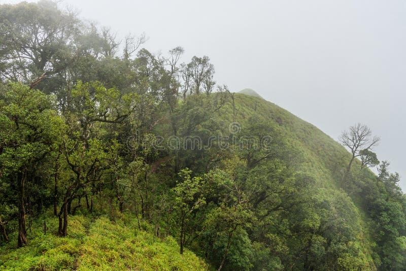 Fördunkla den dolda regnskogen på bergkant i en nationalpark på morgon royaltyfri fotografi