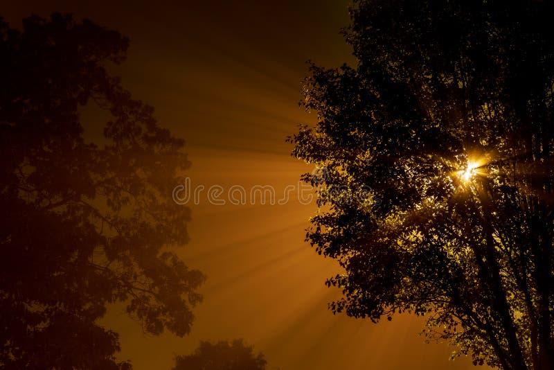 Fördunkla i den mystiska skogen, strålarna skiner till och med de högväxta mörka träden, natt arkivfoto
