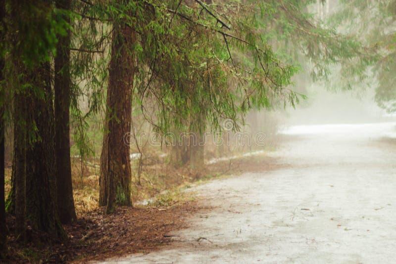 Fördunkla i skogen, gran-trädet filialer som hänger över vägen royaltyfria bilder