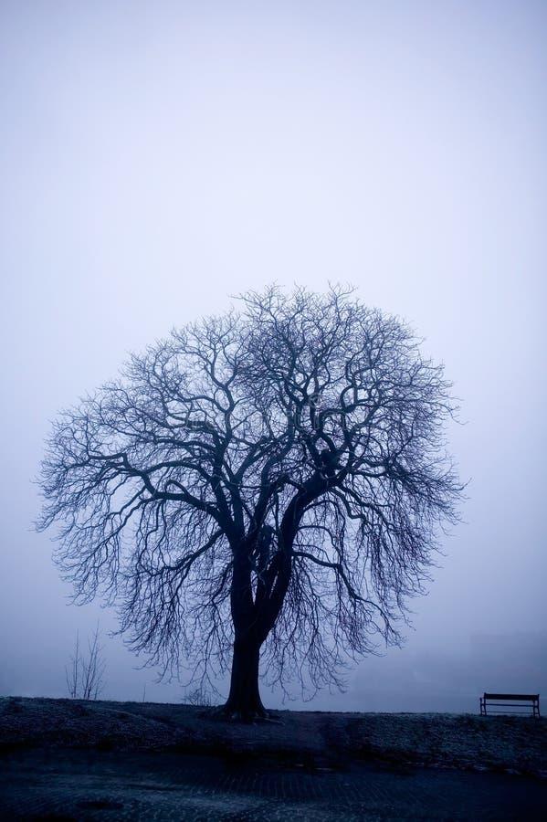 fördunkla treen royaltyfri foto