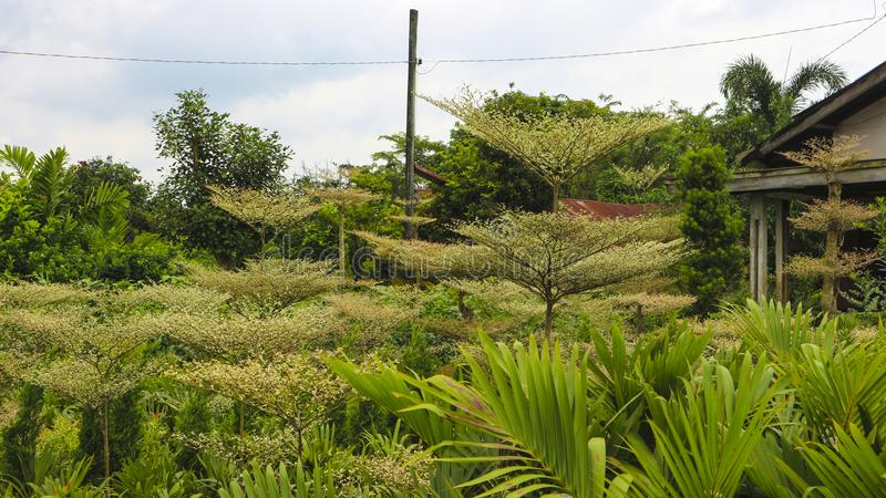 Fördunkla växten i parkera i trädgården royaltyfria foton