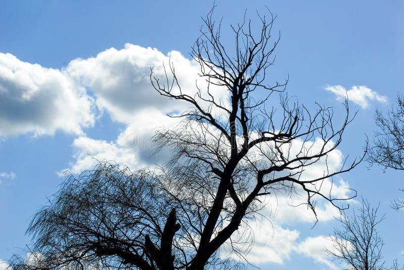 Fördunklar blå himmel för den döda videt att blåsa för vind royaltyfri fotografi