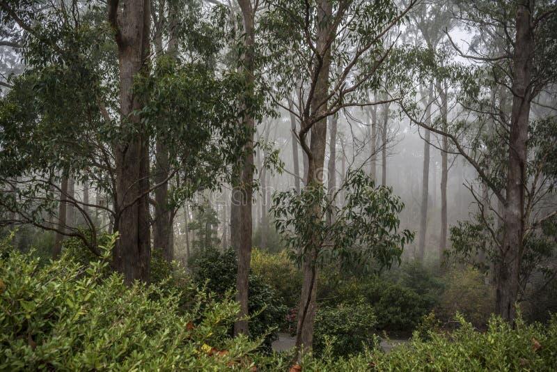 Fördunklat in på den upphöjda botaniska trädgården för montering, södra Australien royaltyfri bild