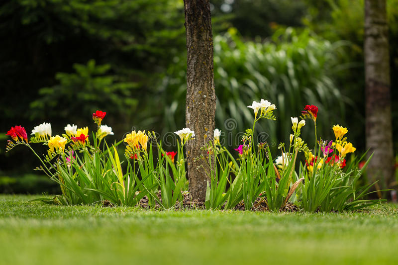 förenad färgblommaträdgård royaltyfri foto