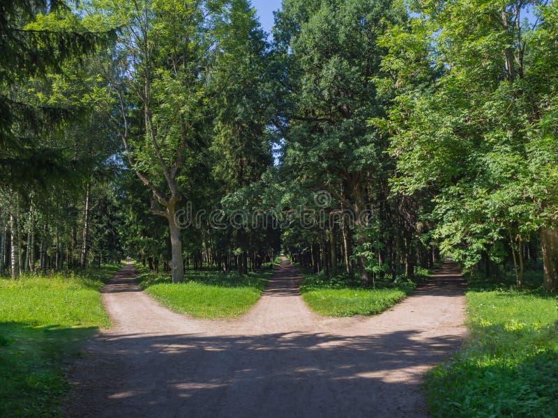 Föreningspunkten, tre skogvägar konvergerar in i en arkivbilder