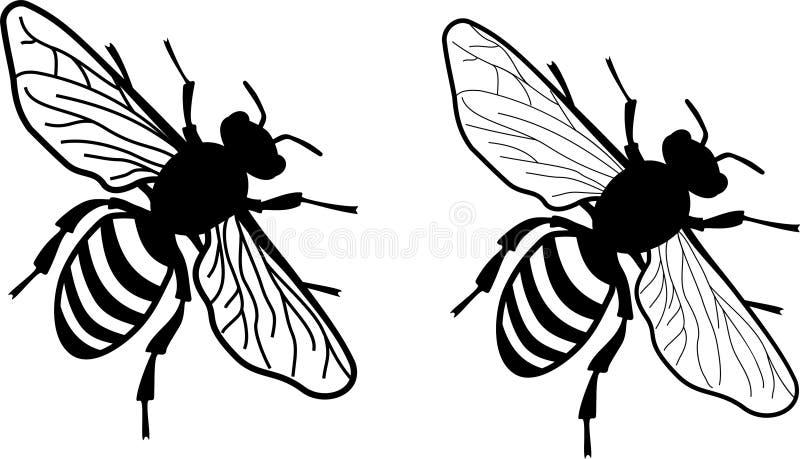 Förenklat realistiskt monokromt honungbi - - två versioner av vingläckerhet stock illustrationer