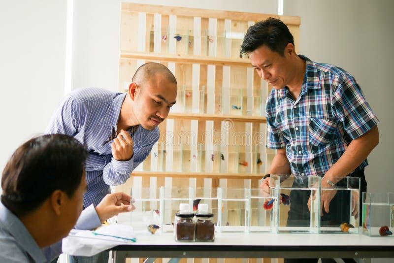 Företagsägaren säljer den siamese stridighetfisken som bettaen är welc fotografering för bildbyråer
