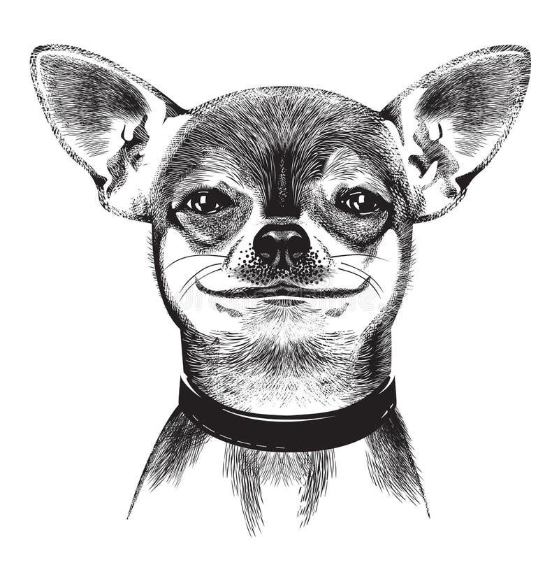 Förfölja Chihuahuaen. Illustration Royaltyfria Foton