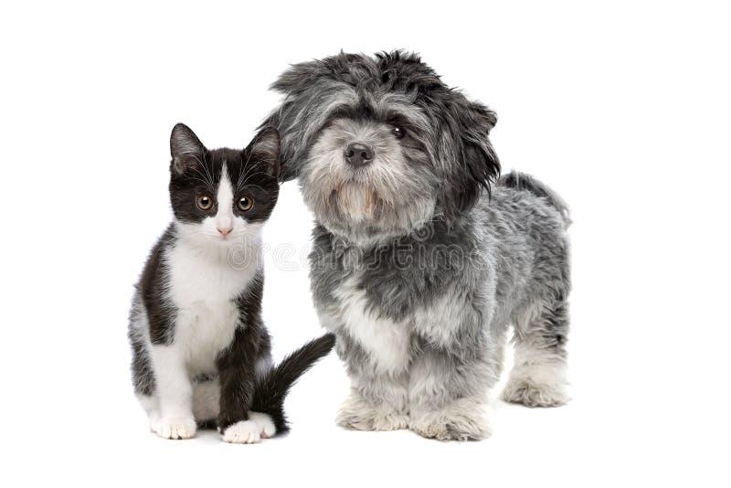 Förfölja och katten royaltyfria bilder