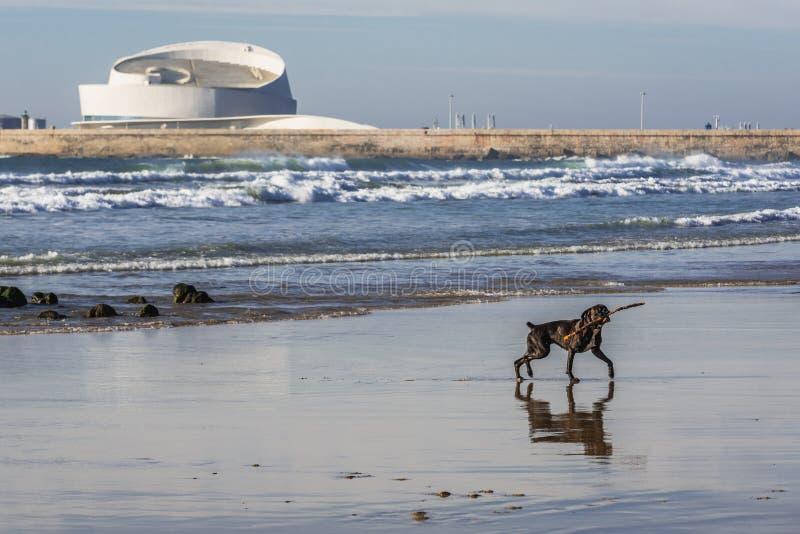 Förfölja på stranden royaltyfri foto