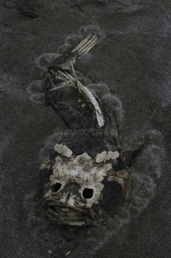 förfalla fisk arkivfoto