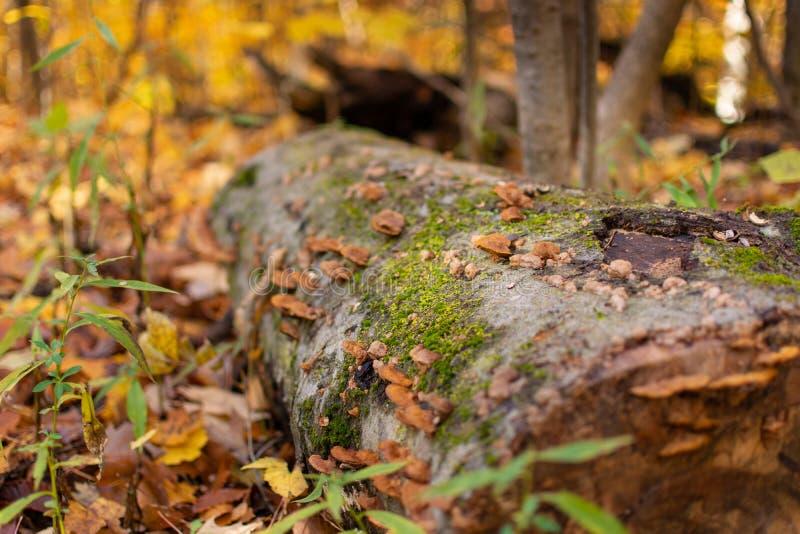 Förfalla journalen med Fungis och grön mossa arkivbilder