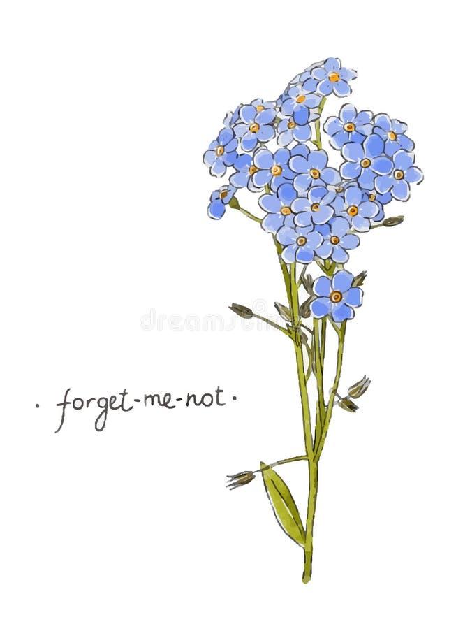 Förgätmigejhand för lös blomma som dras i färg Växt- vektorillustration royaltyfri illustrationer