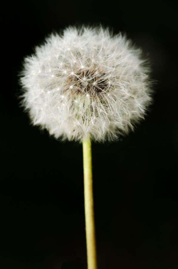 Förgången blommaskrosdetalj arkivfoton