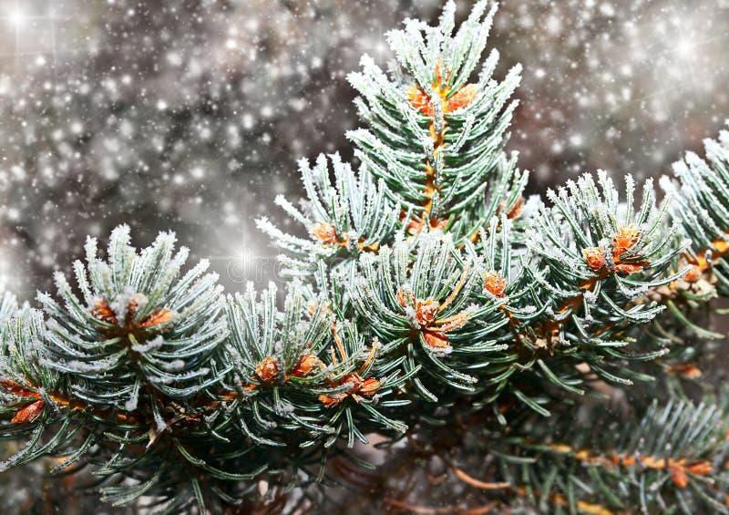 Förgrena sig i snow arkivfoto