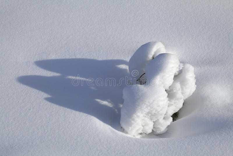 Download Förgrena sig i snowen fotografering för bildbyråer. Bild av detalj - 78727041