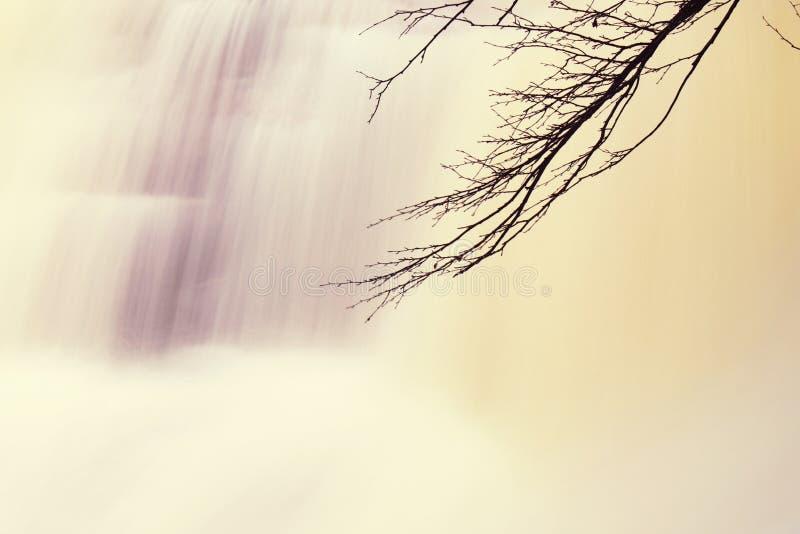 Förgrena sig ovanför snabb ström med enormt av vatten Bergflod mycket av lerigt vatten royaltyfria foton