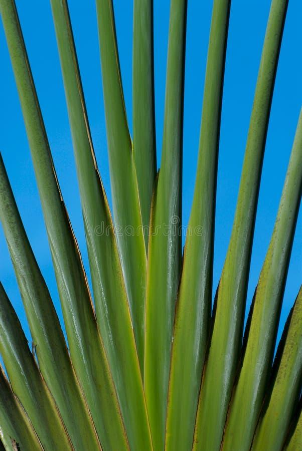 förgrena sig ut palmträd royaltyfri bild