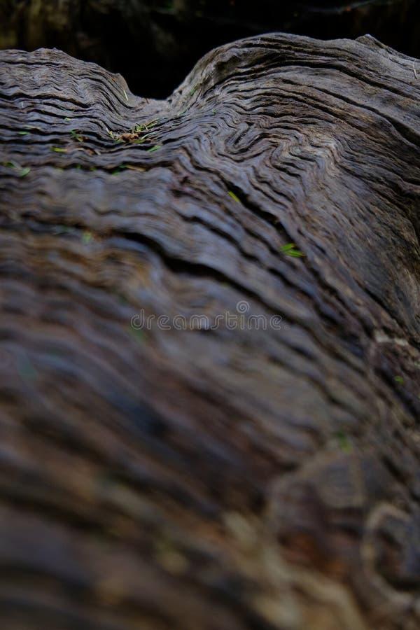 Förgrund för textur för trädstam suddig arkivbild