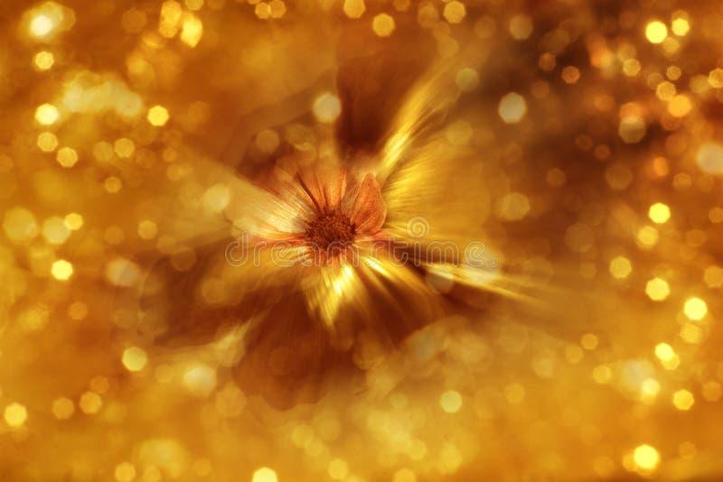 Förgylld blommazoomsuddighet arkivfoto